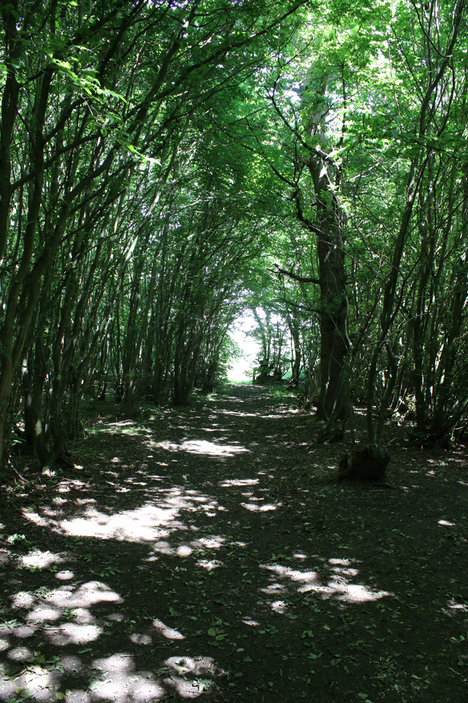 Chalkney-wood.jpg