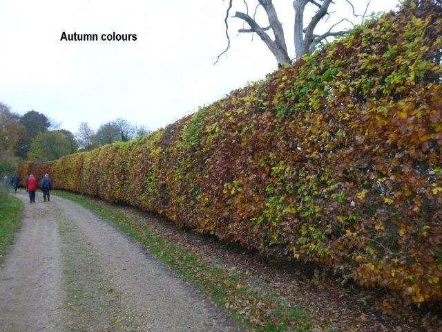 autumnhedge.jpg