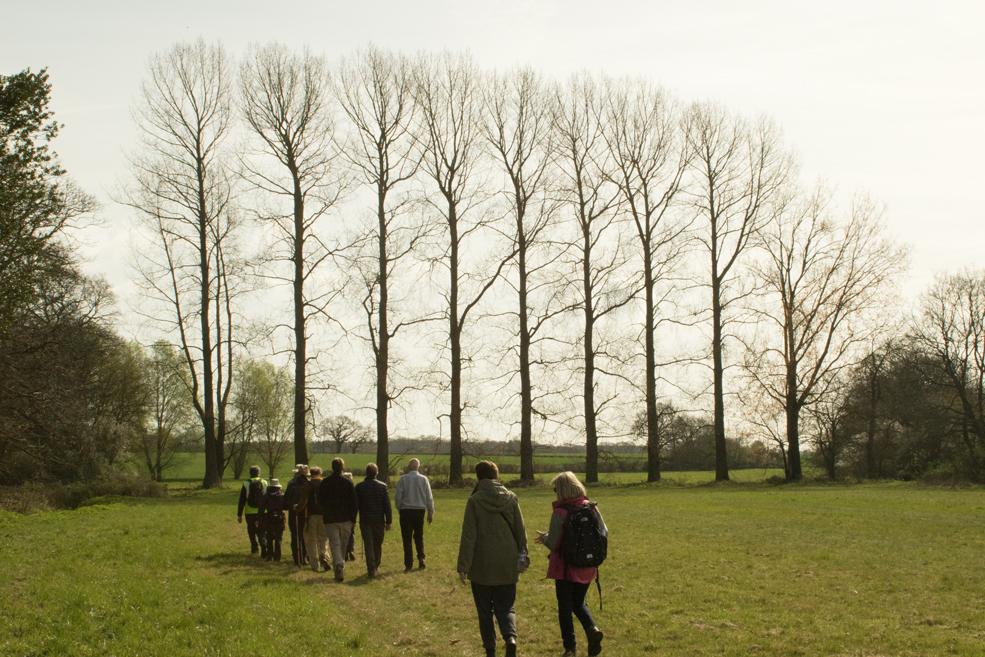 poplars---dark-side.jpg