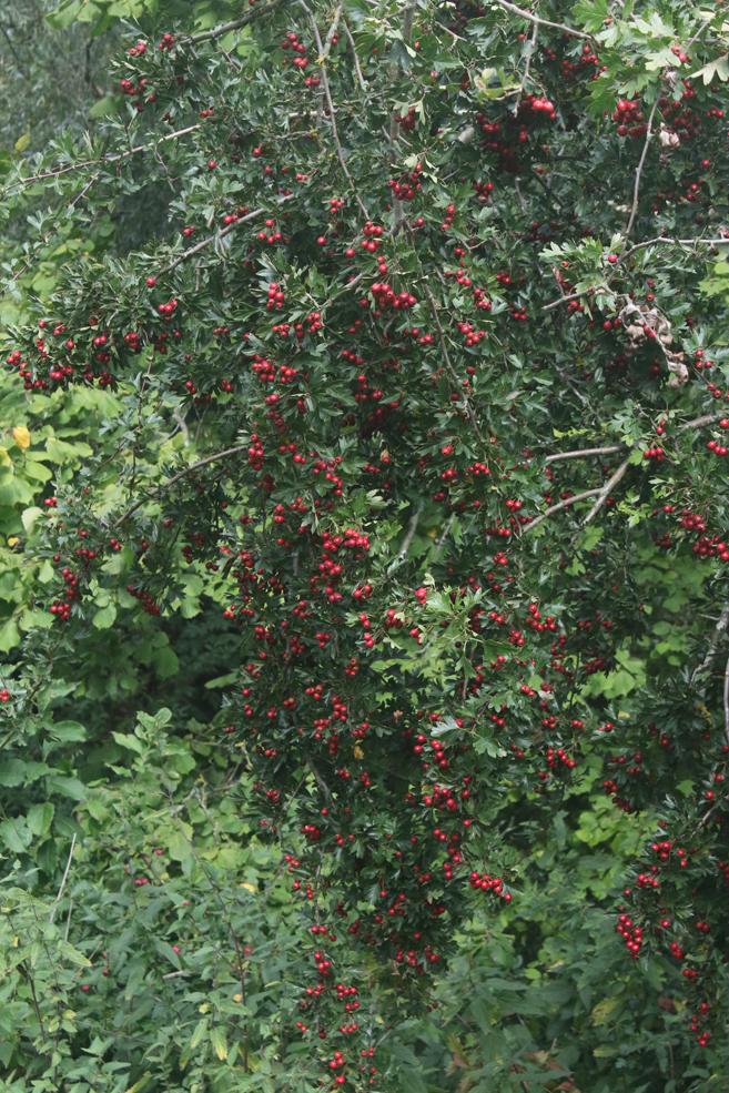 summer-berries.jpg